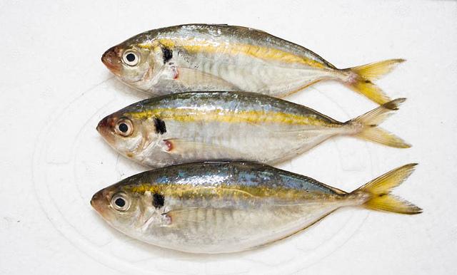 Cá Chỉ Vàng An Toàn Khi ăn