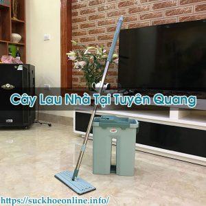 Cây Lau Nhà Tại Tuyên Quang